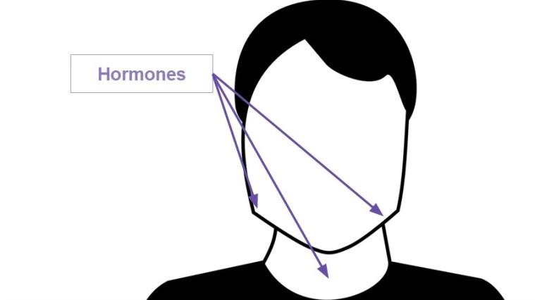 hormones-e1447096537559