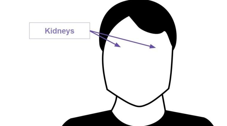kidneys-e1447096414505