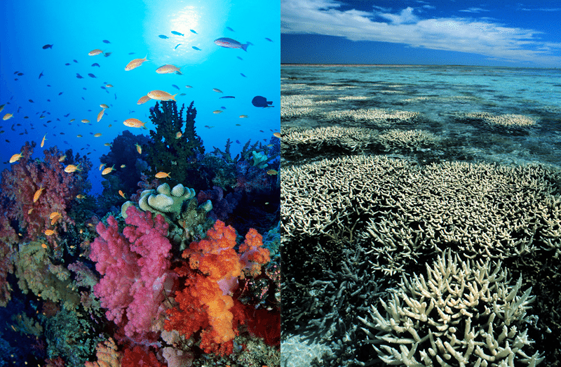 Before and After Coral Bleaching