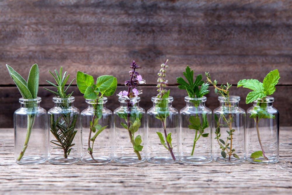 herb, herbs, herb garden