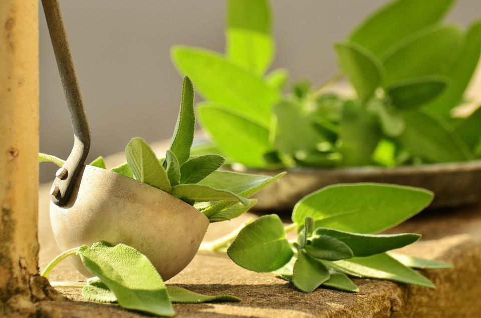 herb, herbs